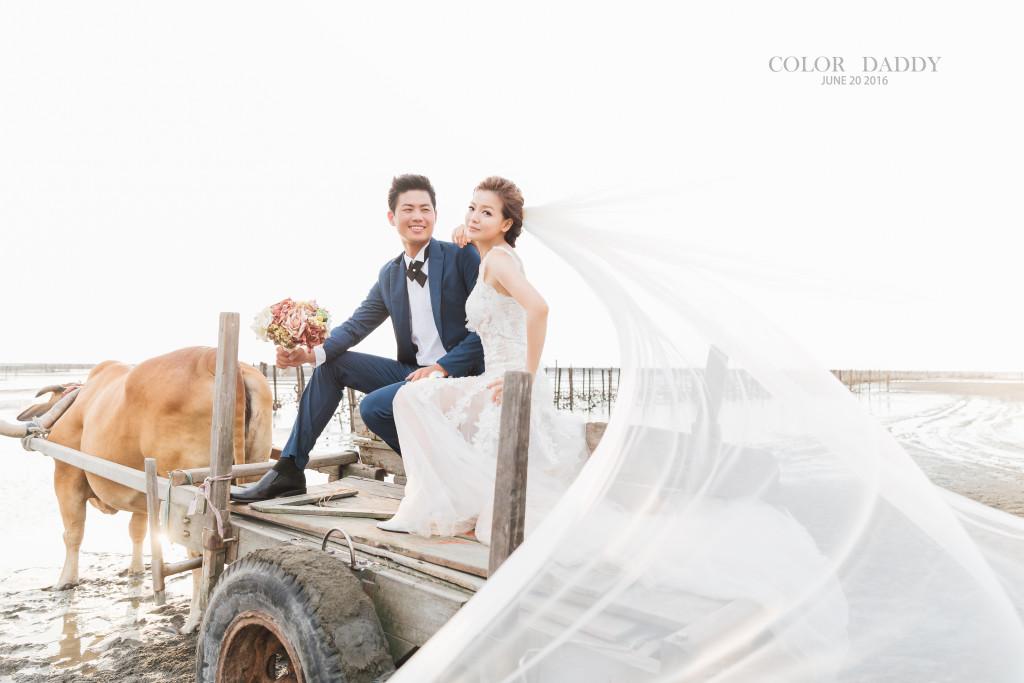 自主婚紗-返鄉-芳苑-牛車 (1)